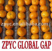Chinese fresh baby mandarin
