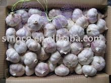 Frischer weißer Knoblauch China (reines Weiß)