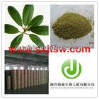 loquat leaf P.E. 77-52-1