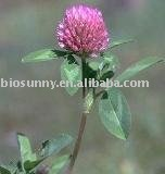 Red Clover Extract P.E 8%-98%