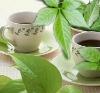 Jiaogulan herbal Teabag--Immortality Herb
