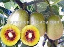 Fresh red kiwi fruit extract powder