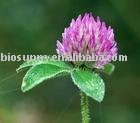 Red Clover Extract P.E 40%