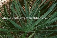 Standard herb extract Saw Palmetto Extract powder