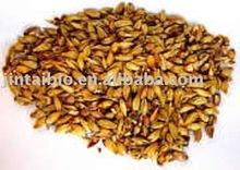 barley malt extract