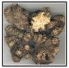 Szechwan Lovage Rhizome Extract(Ligustilide)