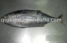frozen seafood (yellow fin tuna)