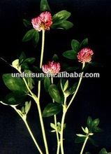 Red Clover Powder Extract -botanical extract