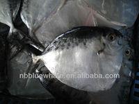BQF Frozen moonfish