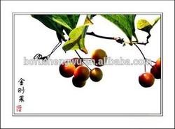 Hot sale natural fruit extract powder Garcinia Cambogia Extract /garcinia cambogia extract 80% hydroxycitric