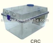 IVC guinea pig cage