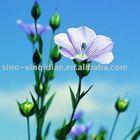 Bulk flax seed oil