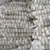 2014 Chinese white garlic