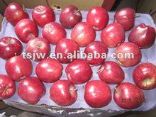 Tianshui fresh huaniu apple fruit