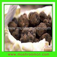 Fresh black tuber truffle