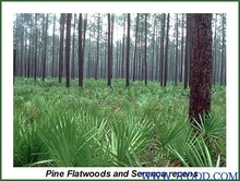 45% natural Saw Palmetto P. E.