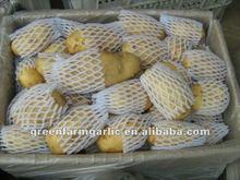 Yellow Holland Potato 2012