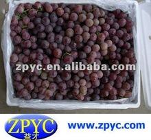 Fresh red grape
