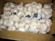 cold storage chinese fresh garlic