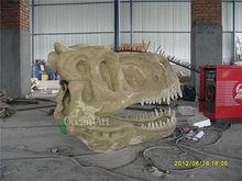 beautiful dinosaur skull for museum show