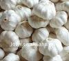 Chinese white natural garlic price hot sale !!