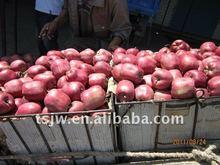 apple fruit Tianshui fresh huaniu apple