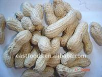 2013 raw crop peanut inshell 9/11