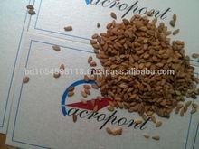 Yellow Sesame Seed