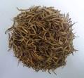 سيلان الشاي-- الشاي الأبيض نصائح ذهبية
