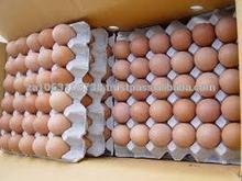 farm fresh chicken eggs