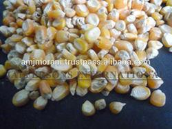 Paraguay Maiz Corn