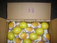 citrus fruit(fresh adalia lemon-lime -orange)