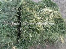 RHODES GRASS HAY HIGH PROTEIN