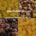 raisin top production type from Iran