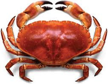 Alive chiliean crabs
