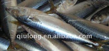seafood frozen fish mackerel whole round 200-300g