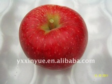 2014 Jonagold apple, red jonagored