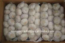 garlic supplier in china