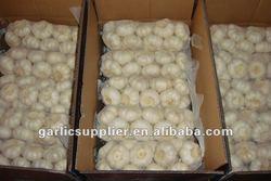 fresh garlic price