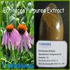 High quality Echinacea Extract Chronic Acid powder in bulk