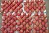 Fresh fruit 2013 New Yantai Fuji Apple