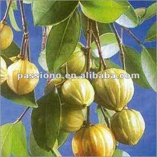 Garcinia Cambogia Extract hydroxycitric acid(HCA-Ca/Potassium) 50%,60% ...