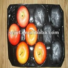 PP fruit tray