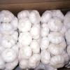 2013Fresh Pure White Garlic(good taste)