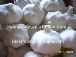 fresh pizhou purple garlic