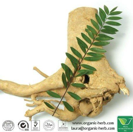 Eurycoma Longifolia;tongkat ali 100:1 200:1