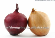 2014 seasonable fresh onion in different pack