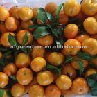 High quality sugar mandarin