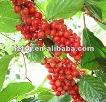 schisandra fruit extract
