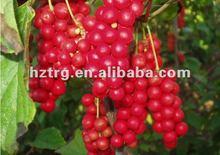 Enhance Sexual:schisandra berries p.e.